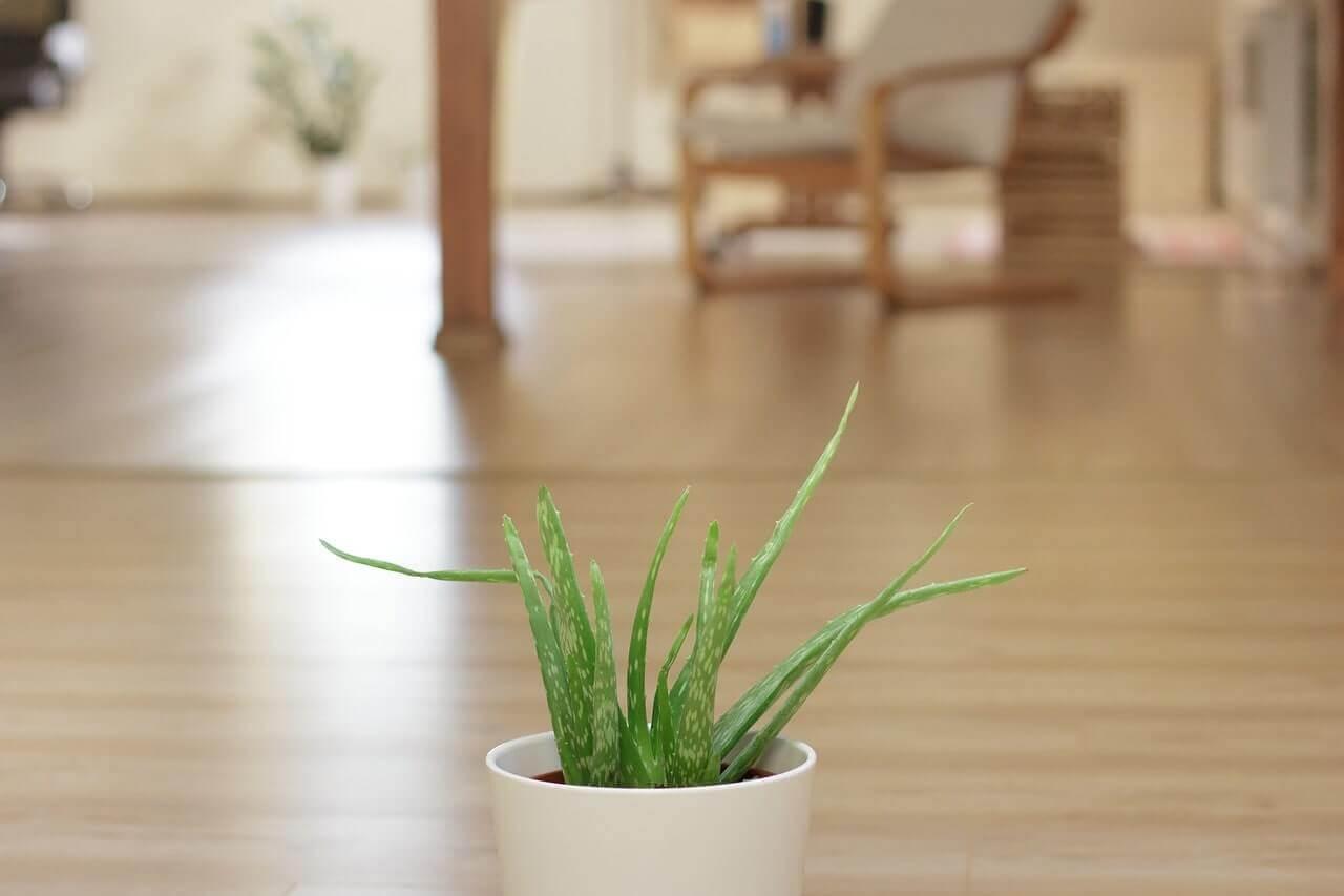 Ev Dekorasyonunda Aloe Vera Kullanımı